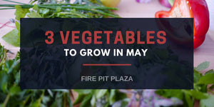 What to Plant Now - 3 Vegetables to Grow in May