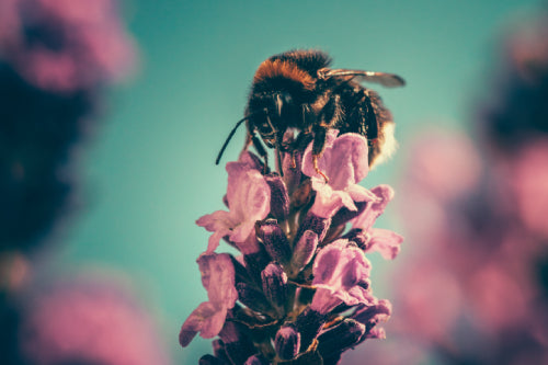 bee pollinating flower eco friendly gardening