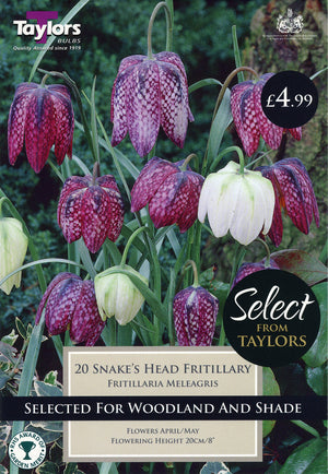 Fritillaria Bulbs, Snake's Head