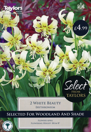 Erythronium Bulbs, White Beauty