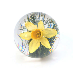 Daffodil Paperweight