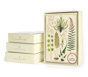 Set of 8 Assorted Fern Notecards