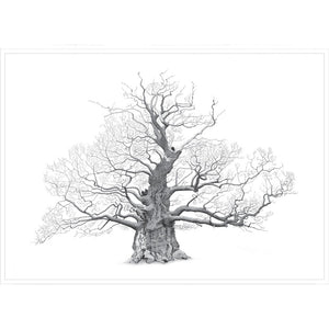 Mark Frith Great Oak Print - Extra Large