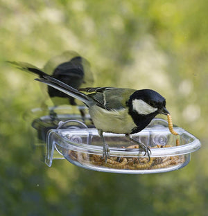 Bird using treat tray feeder