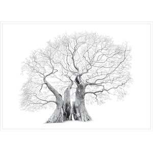 Mark Frith Marton Oak Print - Extra Large
