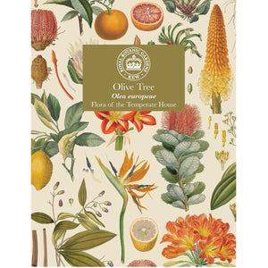Kew Temperate House Seed Packet: Olive tree
