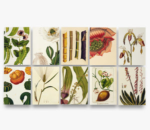 Remarkable Plants Notecards