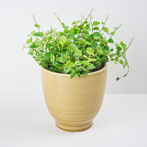 Glazed Plant Pot, Honey
