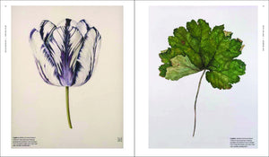 The Shirley Sherwood Collection: Modern Masterpieces of Botanical Art Book