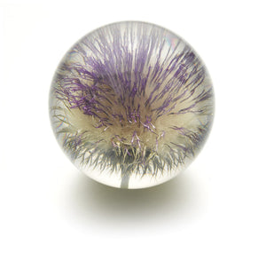 Large paperweight with real thistle