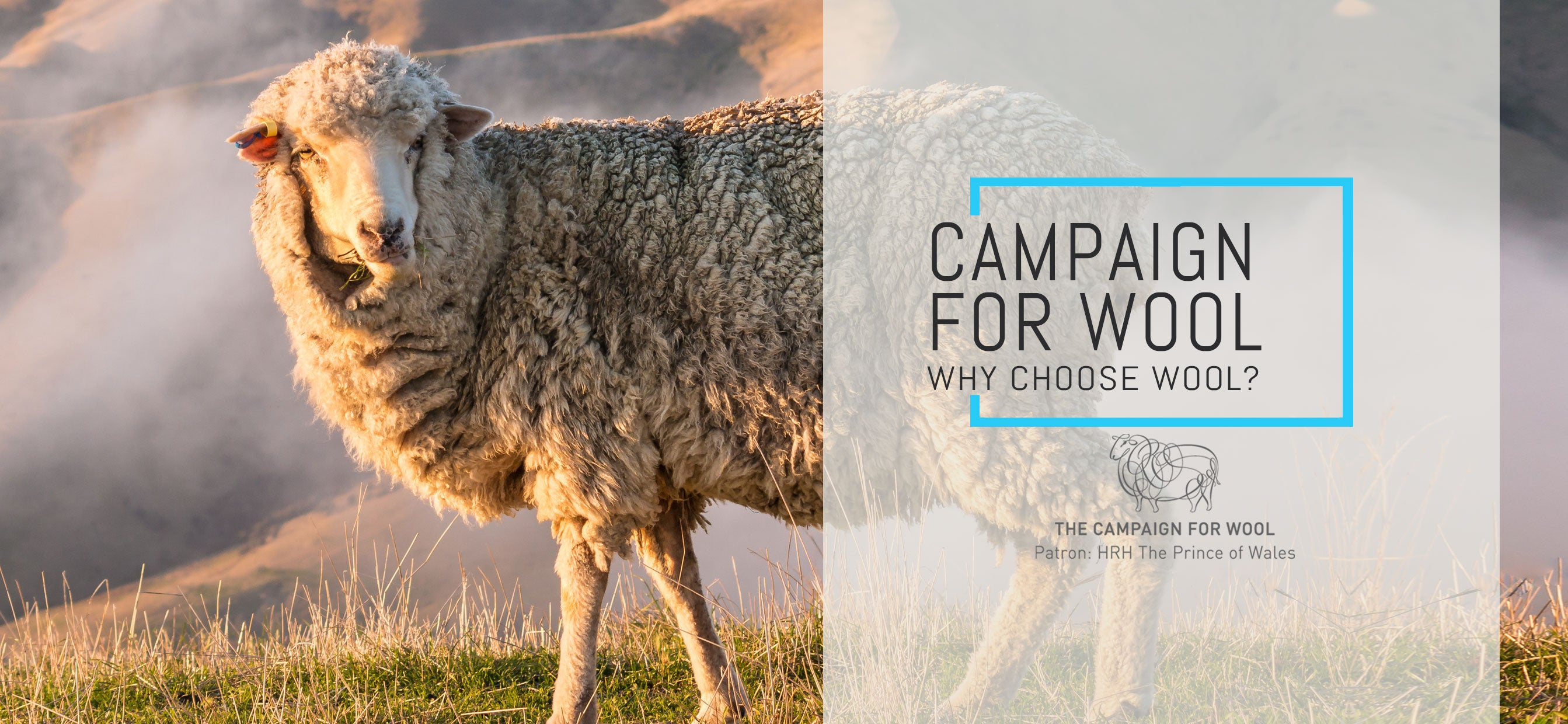 Campaign for Wool: why choose wool?