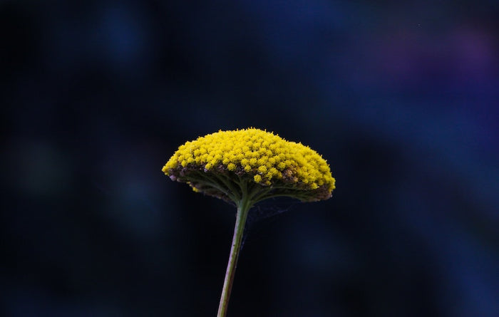 A flower with pollen