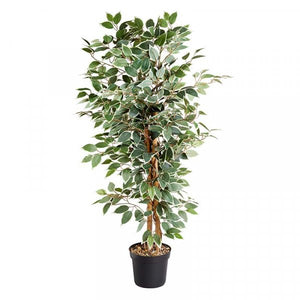 Artificial Weeping Fig 130cm