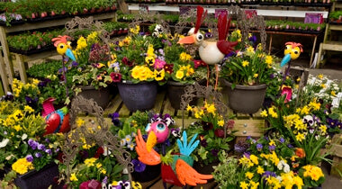 Summer planters, ideal for some instant colour in your garden