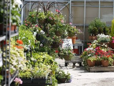 Discounts off plants all year at Carr Farm Garden Centre with our club card