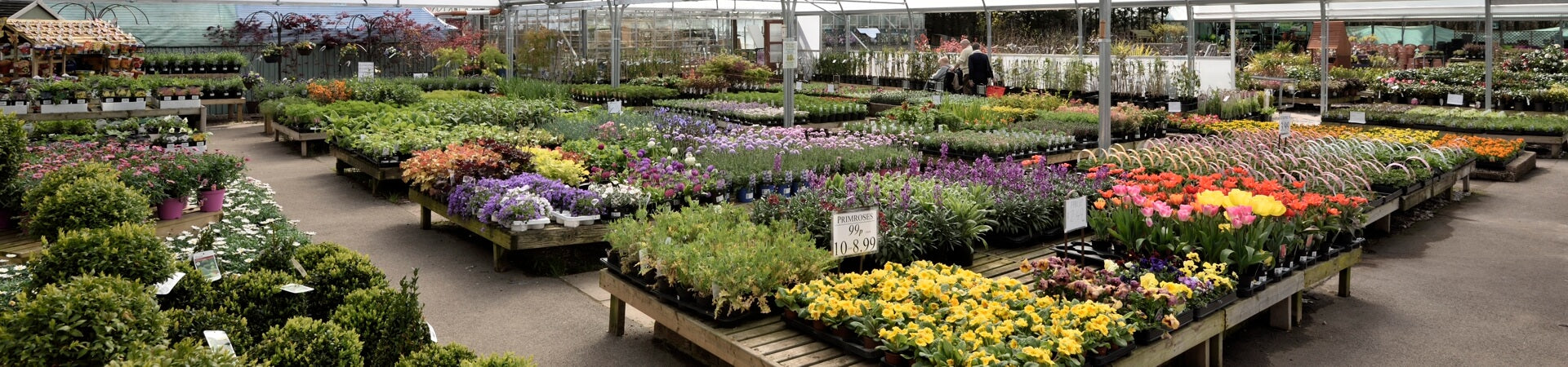 Plants for every home & garden, patios, borders, containers & hanging baskets
