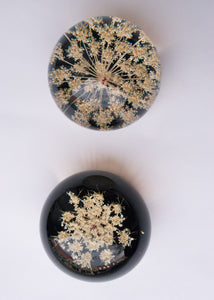Queen Anne's Lace Paperweight