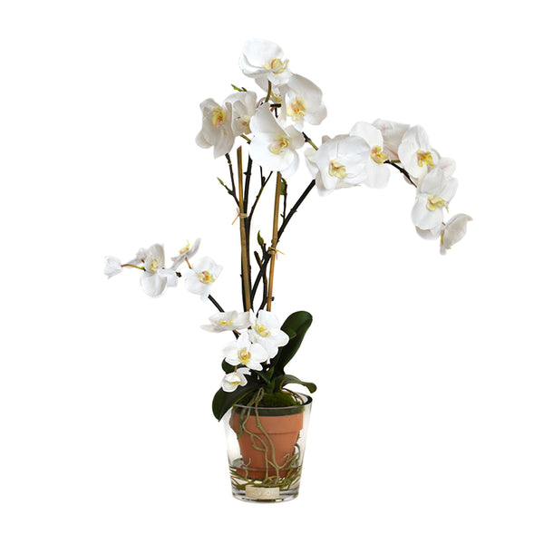 White Phalaenopsis Garden Potted Terracota & Glass Vase • 2 Sizes