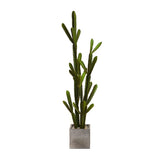 Cactus Garden in Cube Concrete Planter • 2 Sizes