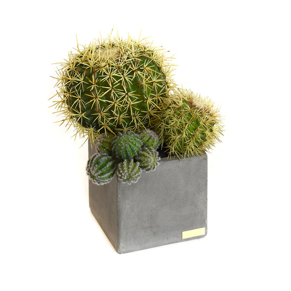 Cactus Garden in Cube Concrete Pot SM
