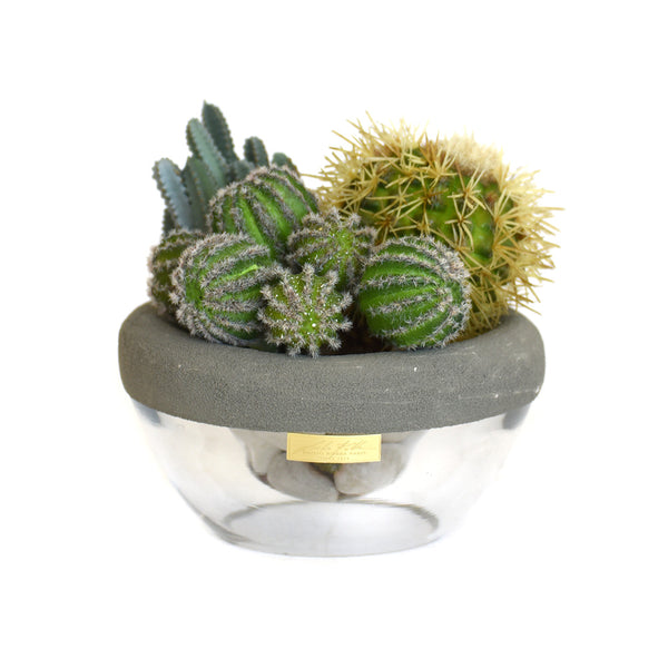 Cactus in Gray Concrete and Glass Bowl SM