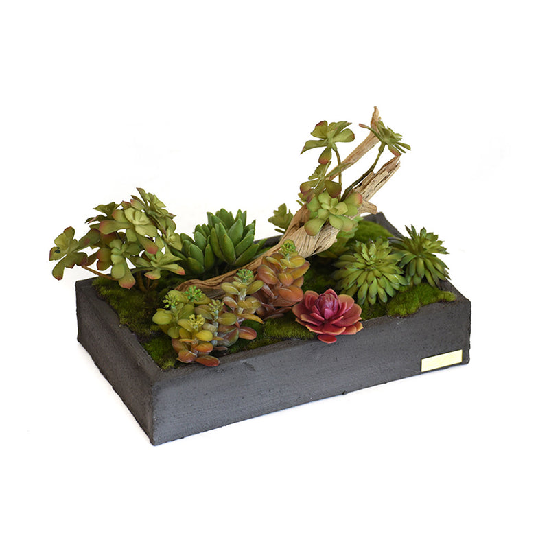 Succulent Garden with Wood in Gray Concrete Container