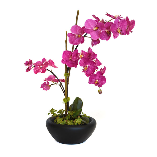 Fuchsia Phalaenopsis Garden in Blooming Black Bowl • 2 Sizes