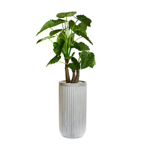 Elephant Ear Plant in Gray Planter • 2 Sizes