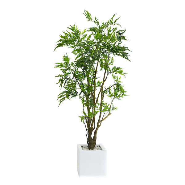 Aralia Tree in White Resin Planter