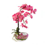 Fuchsia Phalaenopsis Plant Bloom Bowl • 2 Sizes