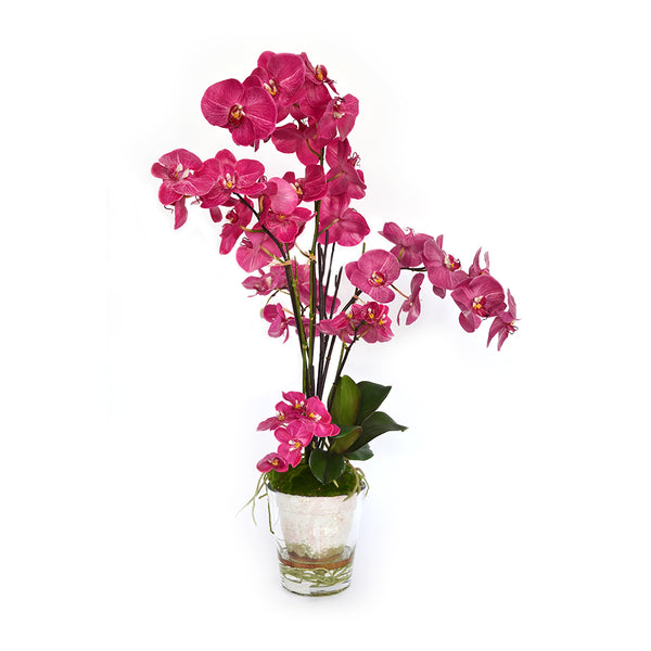 Fuchsia Phalaenopsis Potted Terracotta & Glass Vase