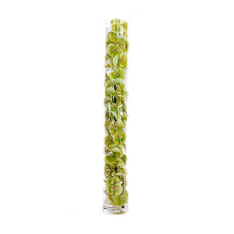 Green Phalaenopsis Orchid in Cylinder • 3 Sizes