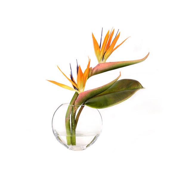 Bird of Paradise Tropical Composition In Moon Vase