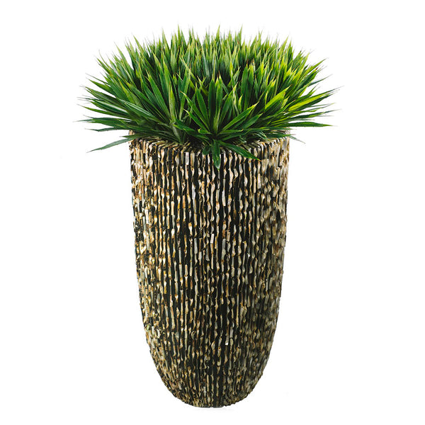 Yucca Plants in Nacre Planter