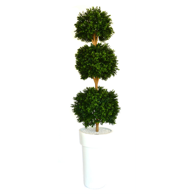 Boxwood Topiary in White Resin Container