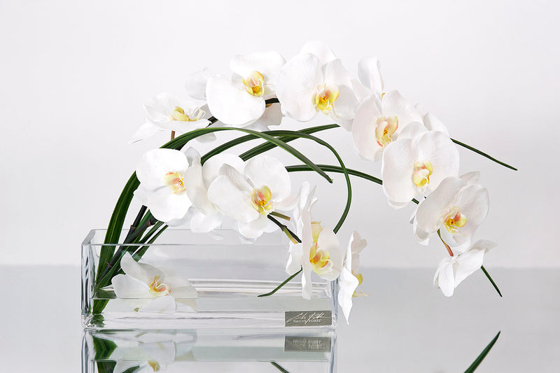 "White Phalaenopsis & Flax 12""L Rectangle Vase"