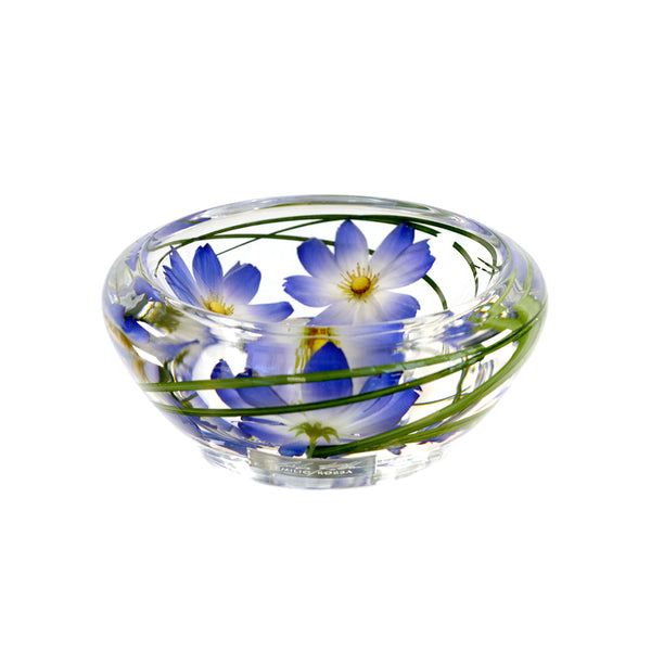 Light Blue Cosmos Flower Bowl