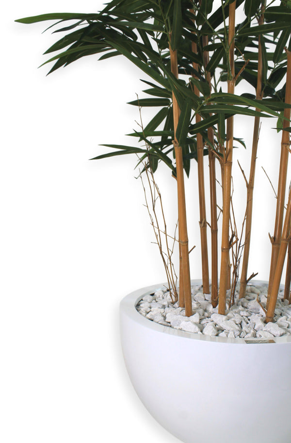 "Bamboo Plant in 15"" Round Vase"