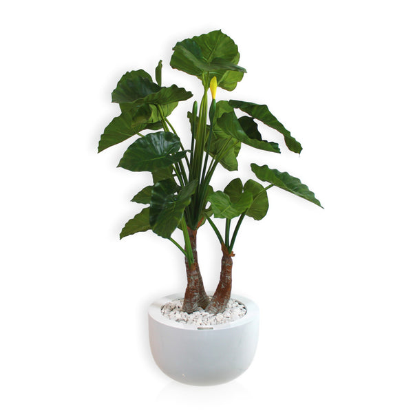 Elephant Ear Leaf in White Planter (Ref#7813)