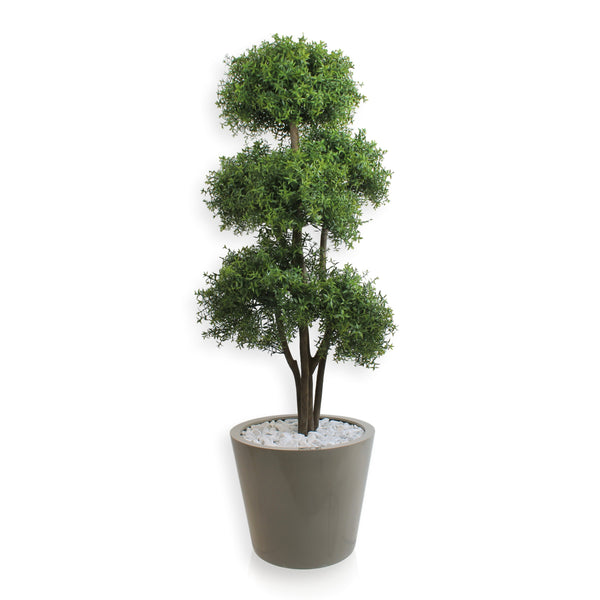 Tea Leaf Tree (Ref#7814)