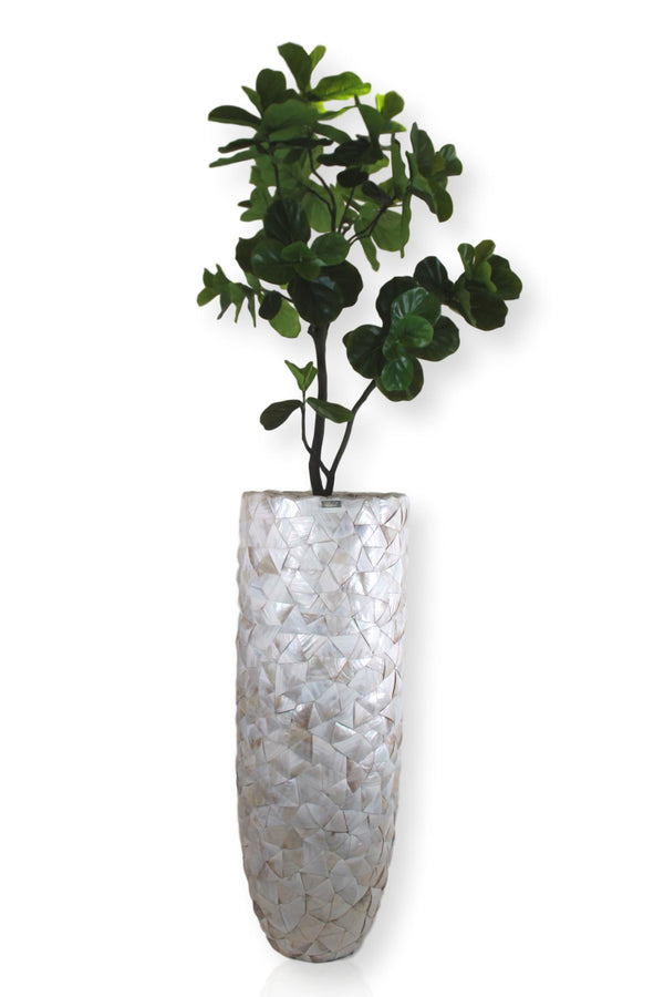 Fiddle Fig Tree in Seashell Vase