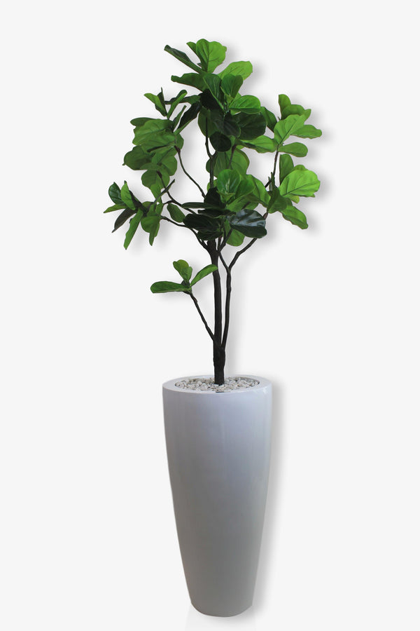 "Fig Tree in 40"" White Vase (Ref#7904)"