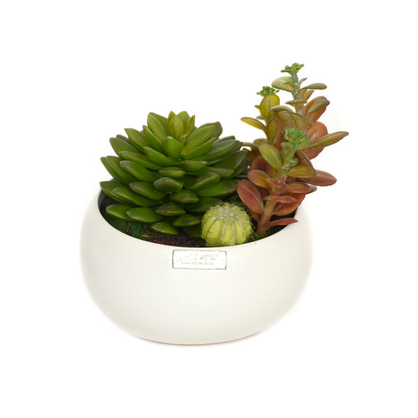 White Ceramic Succulent Garden • 2 sizes