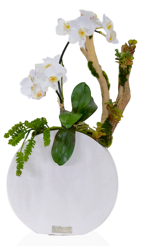 Mini Phalaenopsis with Driftwood in Concrete Round Vase (Ref#7852)