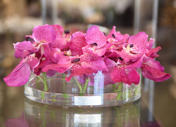 Fuchsia Vanda in Heritage Bowl • 2 sizes