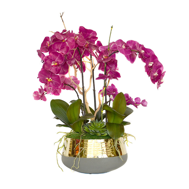 Fuchsia Phalaenopsis with Driftwood & Succulent Garden