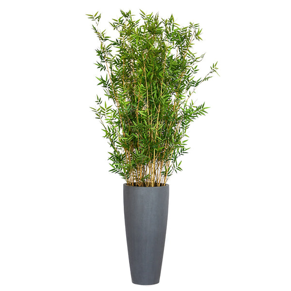 Bamboo Plant in Grey Concrete Vase