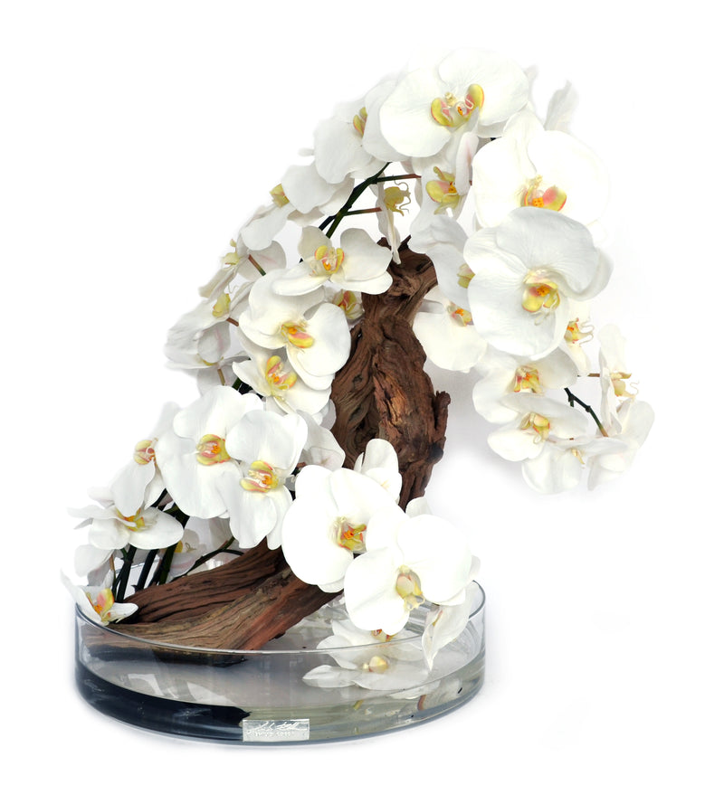 White Phalaenopsis & Drift Wood Heritage Bowl