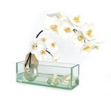 "White Phalaenopsis & Seashells 12"" Glass Plate Planter"