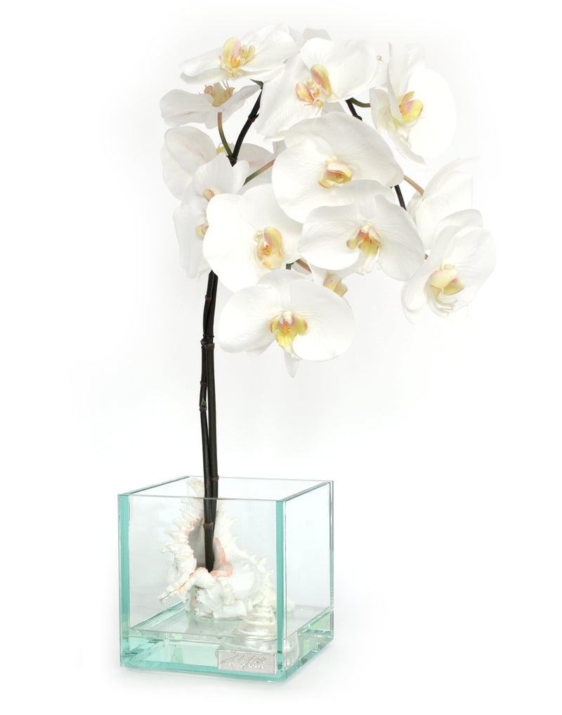 "White Phalaenopsis & Seashells 6.5"" Glass Plate Cube"